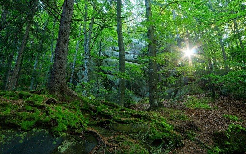 Turi tik kelis hektarus miško – paskaičiavo, kaip iš jų išspausti didžiausią naudą