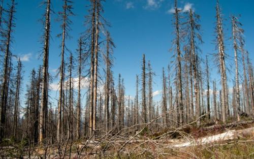 Šių metų žiema negailestingai kėsinasi į Lietuvos miškus: miškininkai net bijo pagalvoti, kas laukia pavasarį