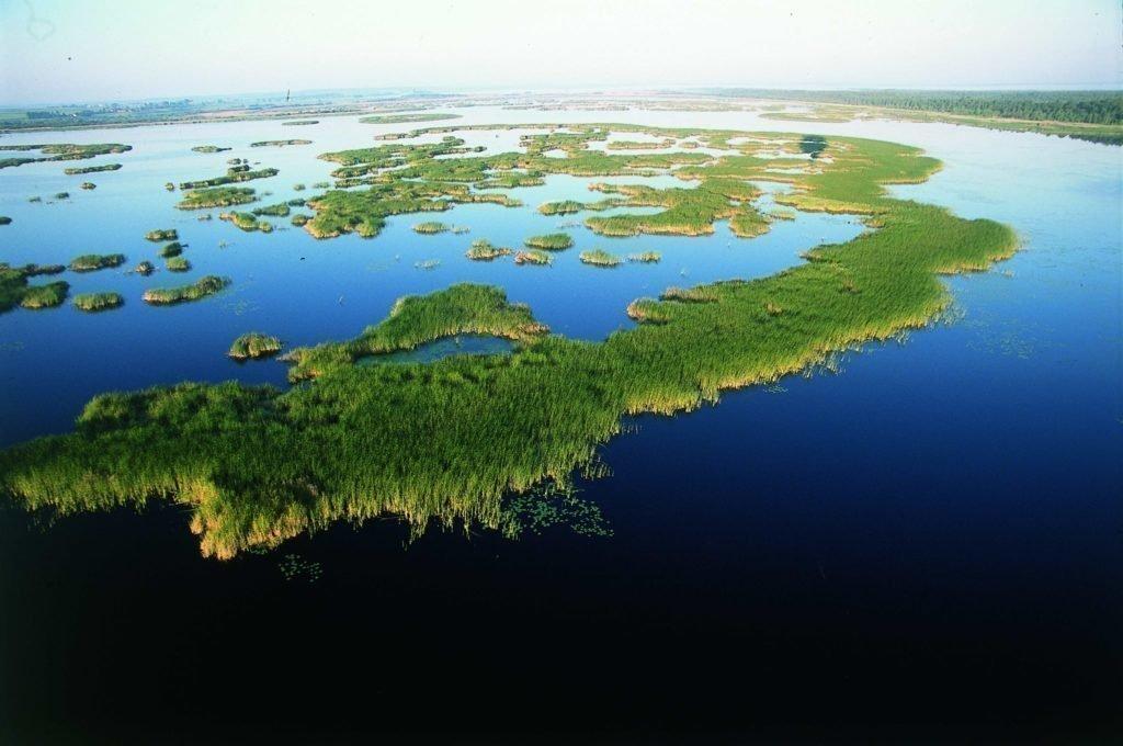 """""""Atgal į gamtą"""": pasaulis atranda natūralumą"""