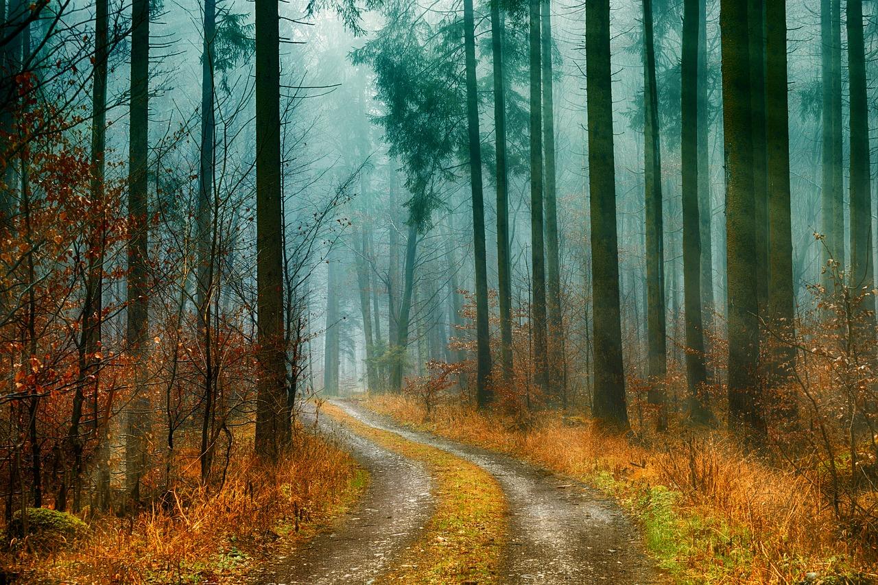 Parama miško keliams įrengti