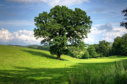 Ar žinojote, kad kiekviena JAV valstija turi oficialų savo medį?