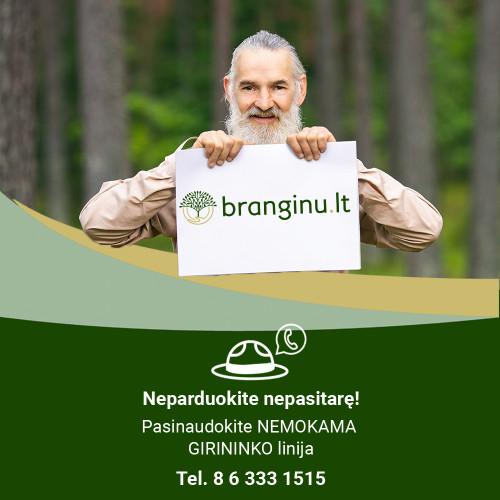 Darni ir atsakinga miškininkystė nėra miško naudojimas tik siekiant pelno