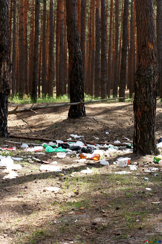 Praėjusiais metais miškuose surinkta 700 tonų atlikeų