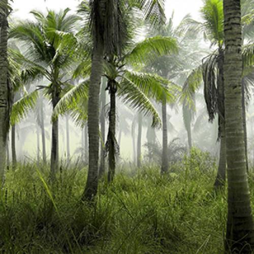 Palmės Lietuvoje?