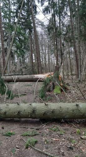 Vėtros padariniai miškuose
