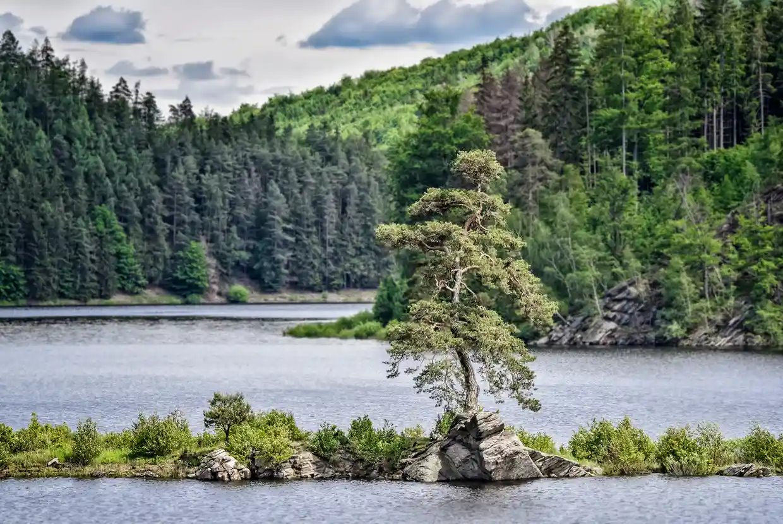 Europos metų medis