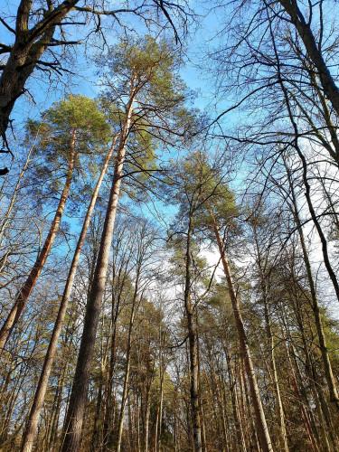 Šie požymiai išduoda, kad miškui iškilusi grėsmė: štai ką turime žinoti