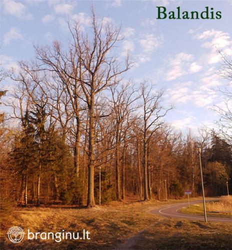 Miškininko kalendorius – BALANDIS