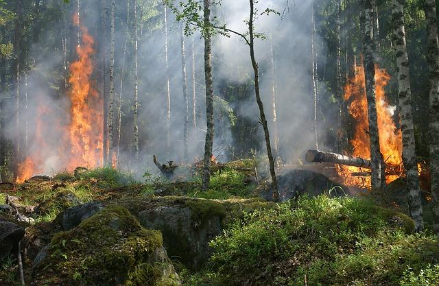 Miškininkų ir ugniagesių bendradarbiavimas padės apsaugoti miškus
