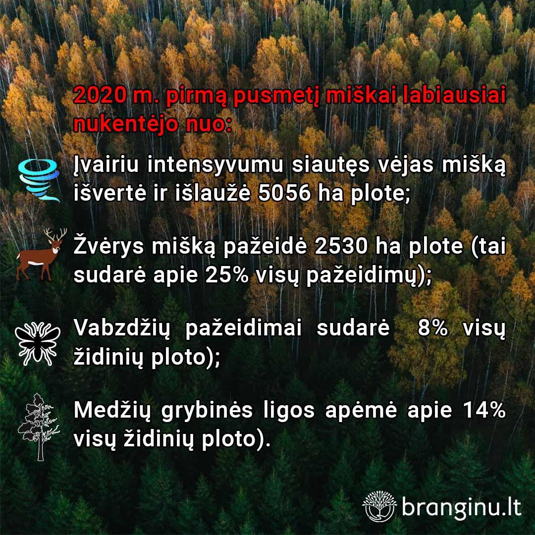 2020 m. pirmą pusmetį Lietuvos miškams daugiausia žalos pridarė vėjas