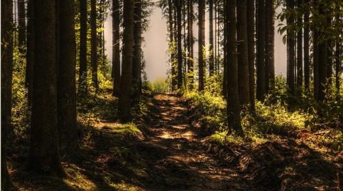 Miško supirkimas