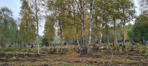 Karalgiryje pasodinta 6600 ąžuolų giria P. Plechavičiui atminti