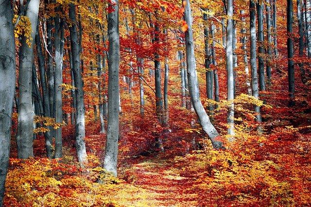 Kodėl medžių labai rudenį pakeičia spalvą?