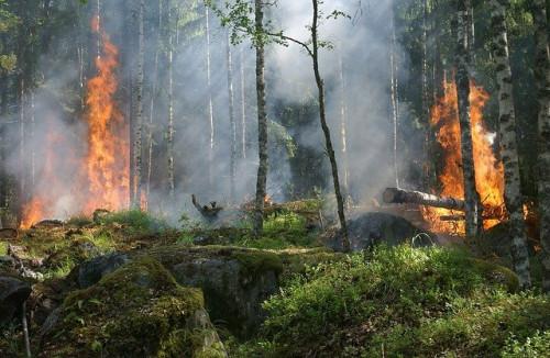 Miškininkai skelbia: baigėsi miško gaisrų sezonas, prevencijai šiais metais naudoti ir dronai