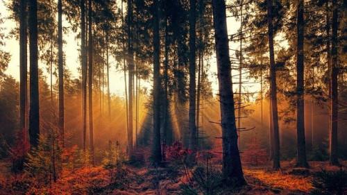 Pradedami aukcionai žaliavinei medienai 2021 m. I pusmečiui įsigyti – jie parodys ir medienos sektoriaus pokyčius ateinančiais metais