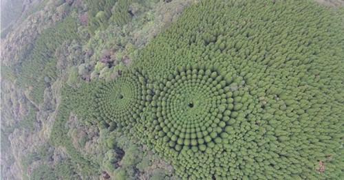 Keistos formos miškas Japonijoje