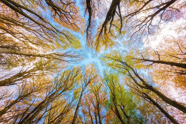 Palankus metas parduoti šį mišką: jau nuo rugsėjo kyla kainos