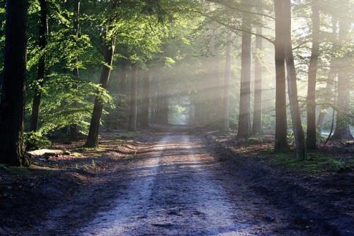 Valstybinių miškų urėdija didina miško kelių remonto ir tiesimo darbų apimtis – vien šiais metais suremontuos beveik 11 000 km kelių
