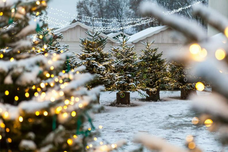 Vilniečiai kviečiami sodinti Kalėdų mišką