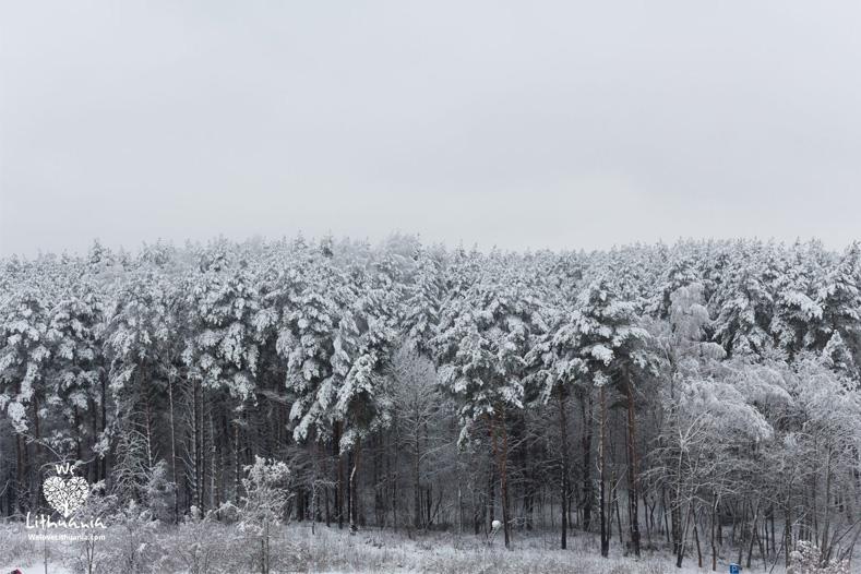 Vyriausybė imasi didinti miškingumą: perduota 3,5 tūkst. ha žemės miškams auginti ir naudoti