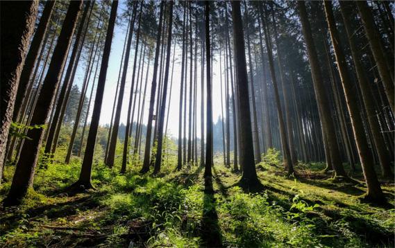 Miškų valdymo standartas užtikrins geresnę miškų apsaugą