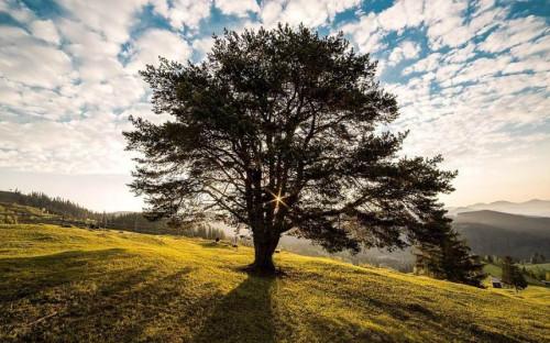 Miško auginimas nesibaigia medžio pasodinimu