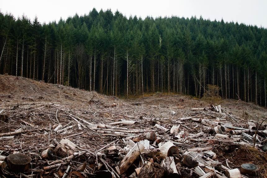 Įmonės superka miškus - kam jie panaudojami po supirkimo?