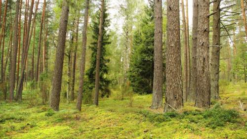 Miško kaina - kas daro jai įtaką?
