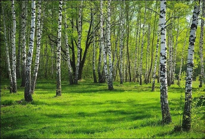 Įmonė perka mišką - kokias paslaugas šiame procese ji dar gali pasiūlyti?