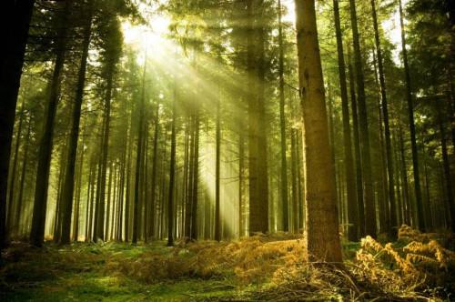 Andrius Kuliešis: Miškas tarnauja Žmogui, Žmogus tarnauja Miškui (I dalis)