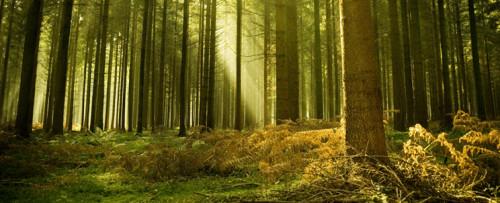 Andrius Kuliešis: Miškas tarnauja Žmogui, Žmogus tarnauja Miškui (II dalis)