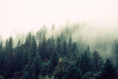 Svarbūs pakeitimai miško įstatyme