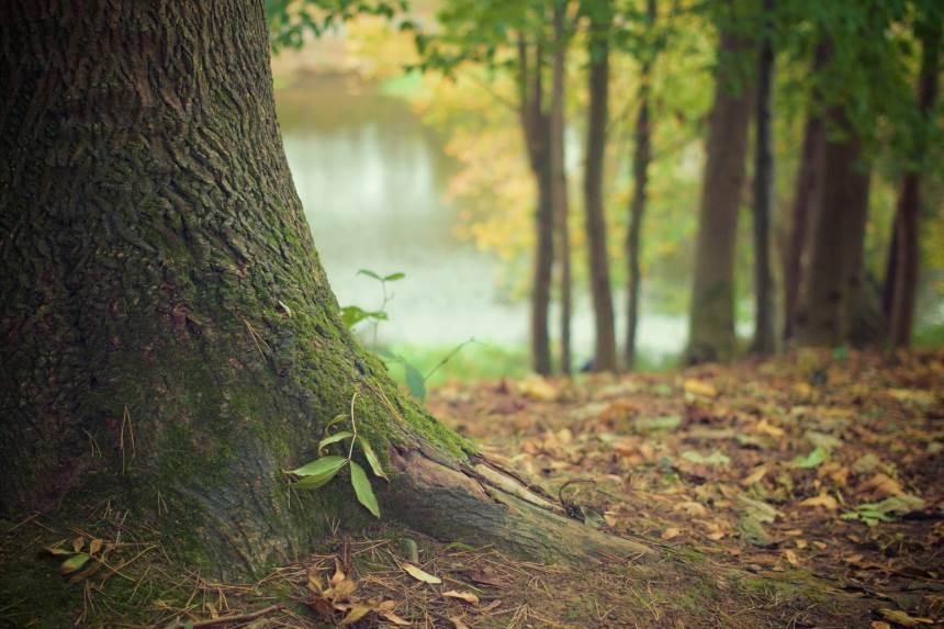 Kaip ūkininkaujama perteklinio drėgnumo miškuose