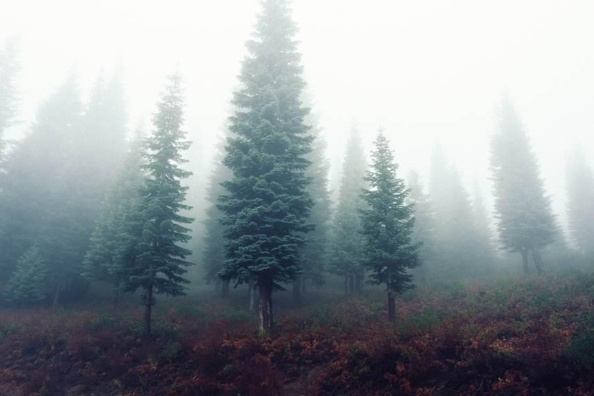 Saugomų miškų savininkams - paprastesnė tvarka