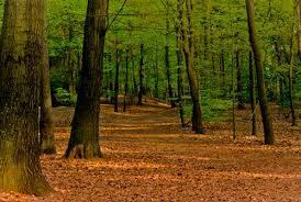 Neplynų pagrindinių miško kirtimų ypatumai skirtingų miškų grupių medynuose
