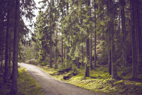 Parduoda mišką - viskas ką privalote žinoti!