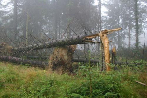Patarimai miško savininkams kaip sutvarkyti mišką