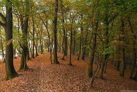 Miškotvarkos projektas - ką reikia žinoti?