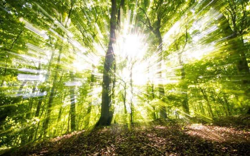 Kaip puoselėti ir prižiūrėti savo mišką