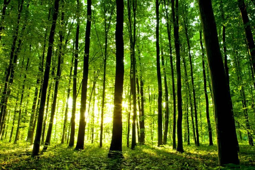 Kaip miškas tampa investicija?