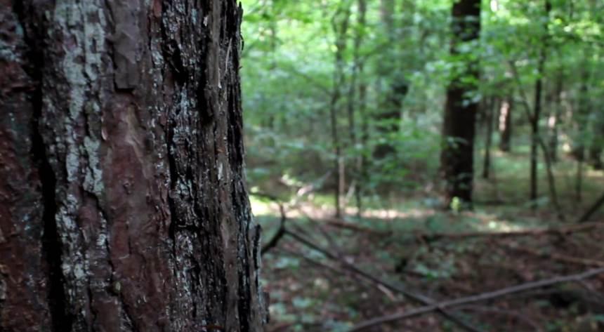 Kaip tvarkyti miškus?