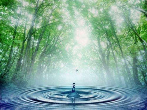 Miškas ir naudingos iškasenos