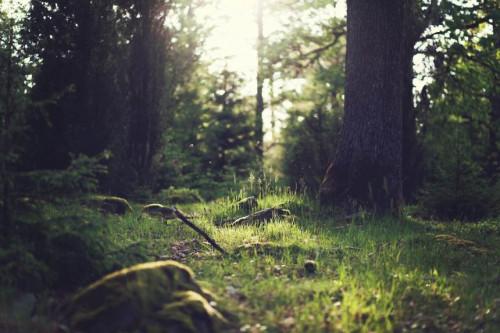Seime priimtos Miško įstatymo pataisos
