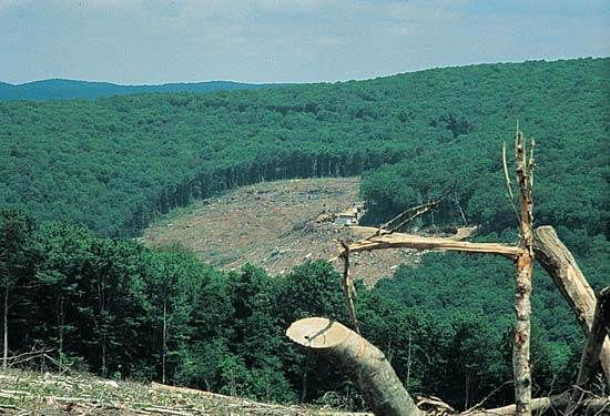 Miško reforma pradedama
