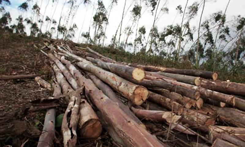 Tvarkome mišką pagal reikalavimus