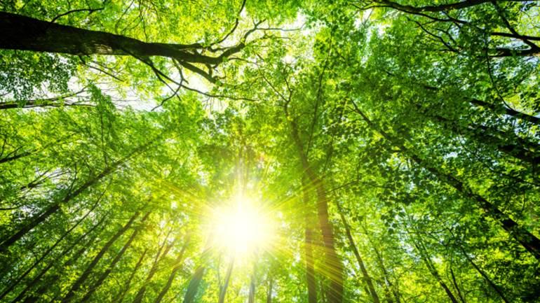 Reikalavimai veisiant bei prižiūrint mišką