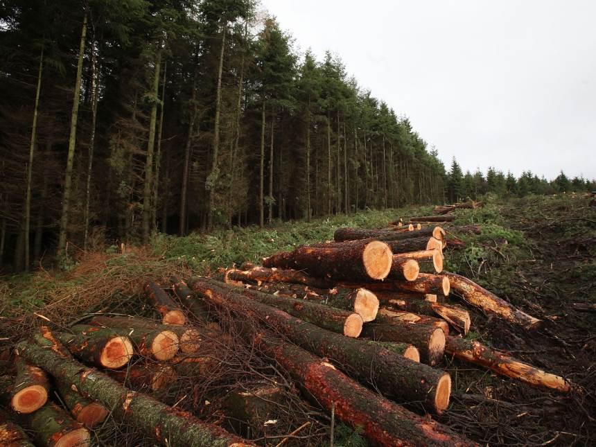 Miško kirtimo rūšys