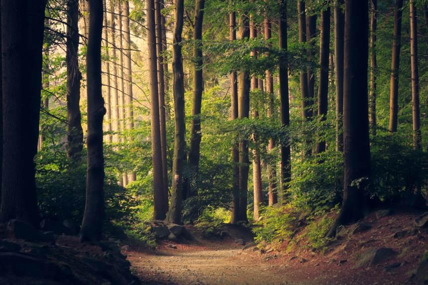 Miškų urėdijų pertvarka – ko tikėtis?