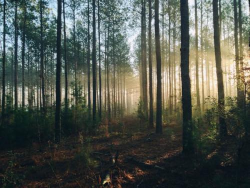 Ateities miškininkystė – kokia ji?