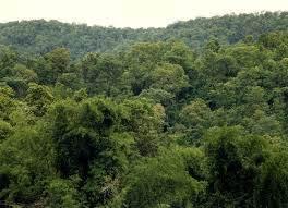 Miškas ir jo veiklos apribojimai- kaip iš to gauti naudos?